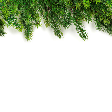 Christmas tree branches on white background Stock Photo