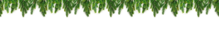 Christmas tree branches on white background as a border or template Stockfoto