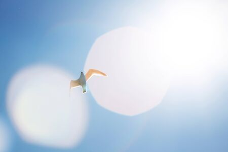 Seagull in the air with wings wide open in-front of the sun Stock Photo