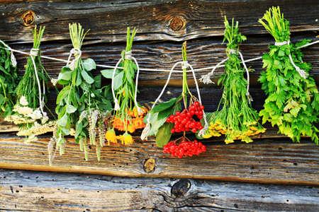 milfoil: Drying herbs