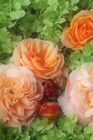 Roses and hortensia bouquet photo