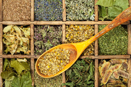 medical herbs: Assorted medical dried herbs