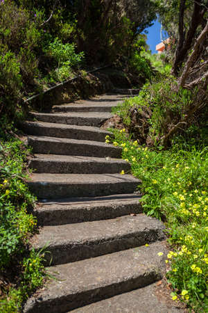 Stairs in the garden  photo