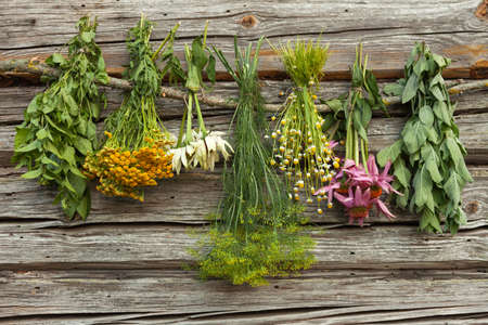 medical herbs: Drying medical herbs in a shadow: melissa,echinacea,chamomile,dill,tansy.