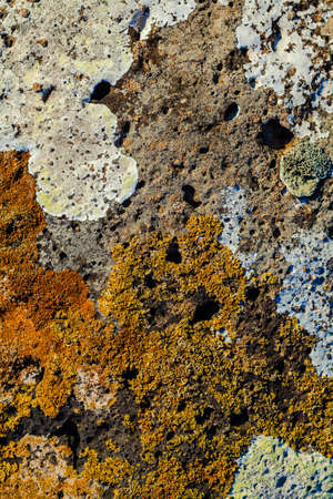 moos: Background image of lichen and moos.