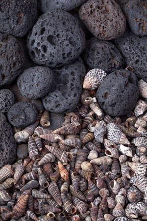 volcanic stones: Volcanic stones and shells. Stock Photo