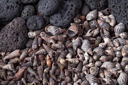 pebbles: Sea shells and pebbles