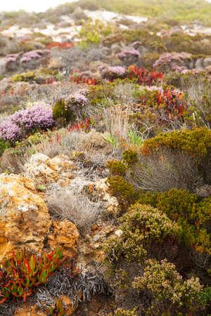 portugal agriculture: Beautiful dunes plants in autumn. Atlantic ocean coast in Portugal. Stock Photo