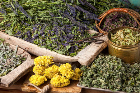 Various dried medical herbs: mint, tilia flowers, anise hyssop, helichrysum arenarium.