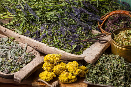 Various dried medical herbs: mint, tilia flowers, anise hyssop, helichrysum arenarium.