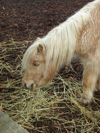 Small Pony Stock Photo