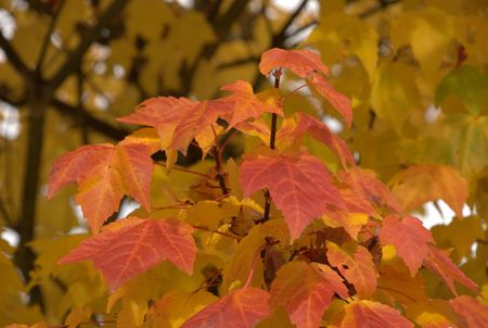 fall Leaves Banque d'images