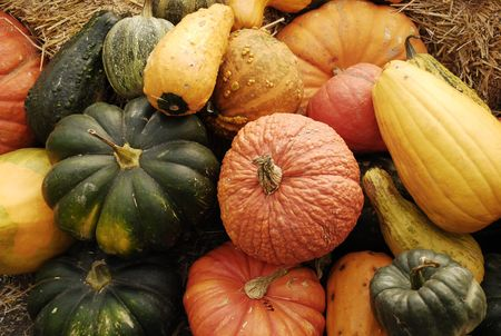 Display of fall pumpkins and gourds Stock Photo - 3780190