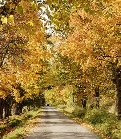 Country Road Showing Autumn Colours