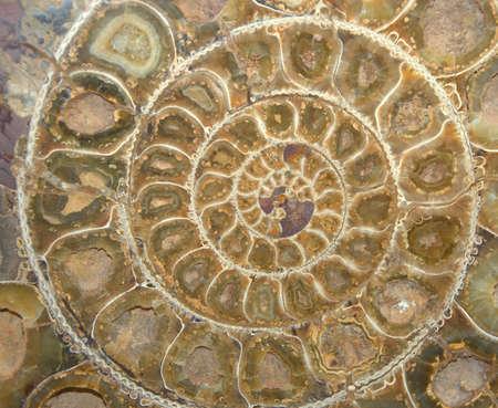 Ammonite Fossil Cross-Section Stock Photo