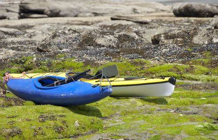 Kayaks waiting by the sea on a bed of vibrant green seaweed.