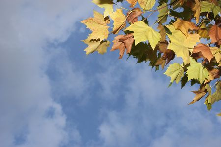 Soft autumn leaves with transitioning colors. Stock Photo - 5799755