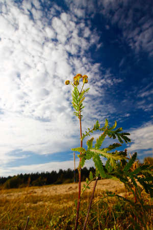 Plant in a field against the sky