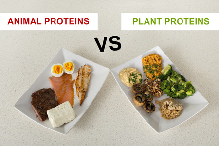 animal versus plant proteins: one plate with beef, eggs, salmon, cheese and chicken grill and another with nuts, mushrooms, broccoli, lentil, hummus and quinoa Stockfoto