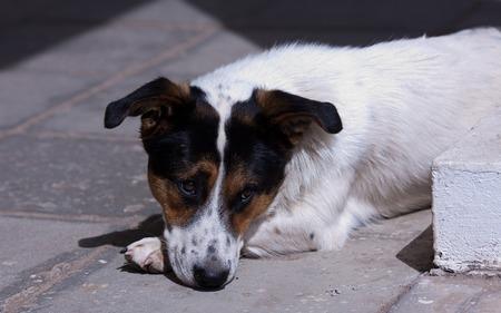Sad dog  Dog waits for his mistress