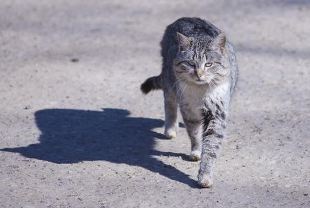 hobo: Stray cats living near the monastery