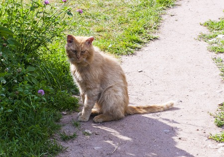 hobo: Cat who lives on the estate of a Russian diplomat and writer Griboyedov.