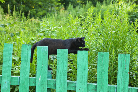 Black cat on the fence. Rostov Russia.