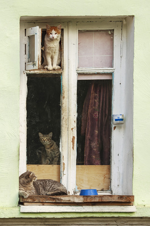 Cats are sitting on the window.