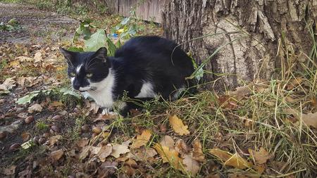 A stray cat sits under an oak .