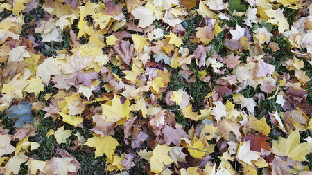 falling autumn leaves in a park Stock Photo