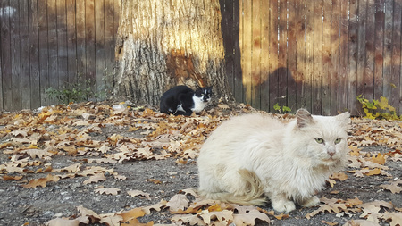 Autumn and stray cat.