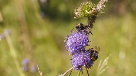 Bumblebee near flower