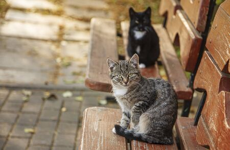 The cat is sitting on the bench. Stock Photo