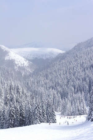 serbia xmas: snow covered ski slope with pine trees