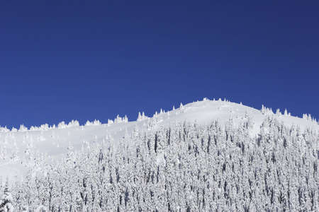 serbia xmas: snow covered  mountain with pine trees and cloudless blue sky Stock Photo