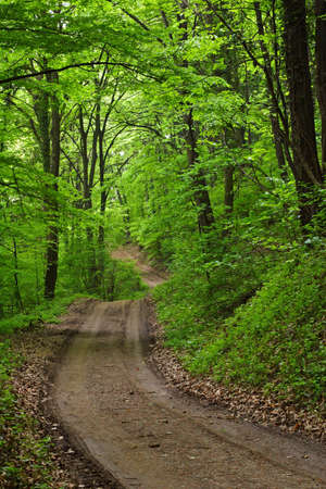 lush green forest photo