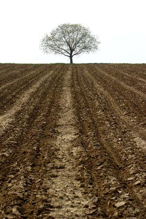 lone tree and farmland Stock Photo - 389103