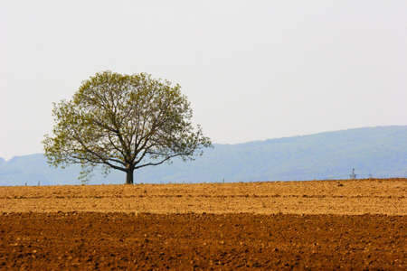 lone tree and farmland Stock Photo - 389086