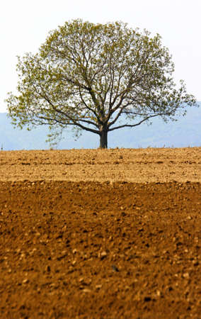 lone tree and farmland Stock Photo - 389085