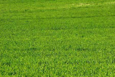 green field Stock Photo - 389076