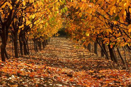 pathway in autumn photo