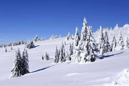 serbia xmas: winter view of snow covered mountain and trees Stock Photo