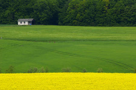 yellow and green fields with tree in french countryside Stock Photo - 636641