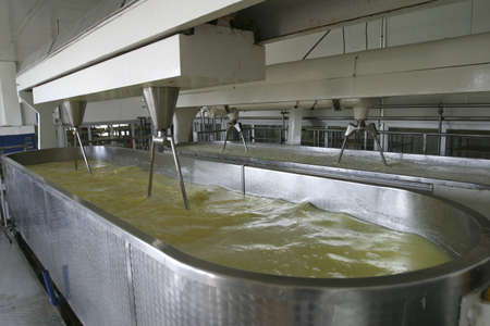 cheese making machine in modern dairy factory