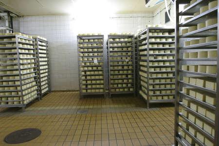 storage units: cheese in cold storage in modern dairy