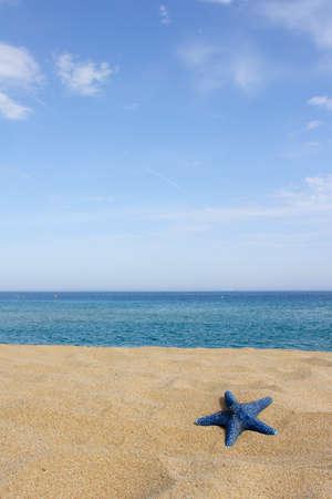 blue starfish on empty beach, corsica, france, mediterranean Standard-Bild