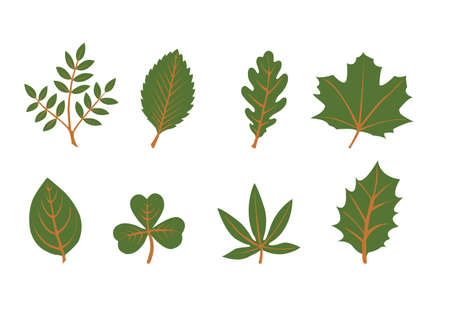 set of vector leaf shapes on white background