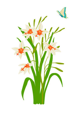 vector illustration of stylized peacock orchid with butterfly Stock Vector - 1934498