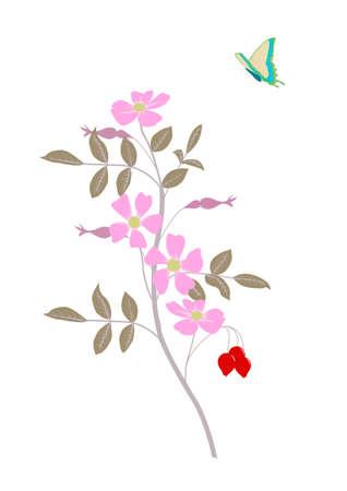 wilde rosa Rose mit fliegenden Schmetterling Vektorgrafik