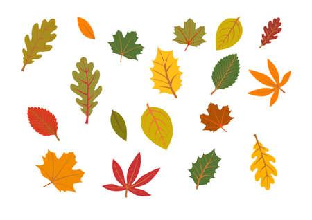forrest: herfstbladeren geïsoleerd op witte achtergrond Stock Illustratie